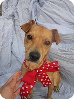 Chihuahua/Dachshund Mix Dog for adoption in El Cajon, California - ALFRED (HW)
