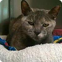 Adopt A Pet :: Sarah - Lunenburg, MA