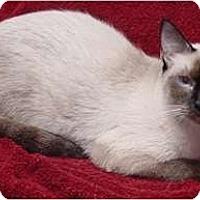 Adopt A Pet :: Brea - Franklin, NC