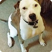 Adopt A Pet :: Bella - Hadley, MI