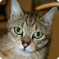Adopt A Pet :: Turkish Taffy - North Branford, CT