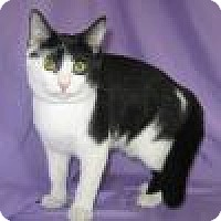 Adopt A Pet :: Lulu - Powell, OH