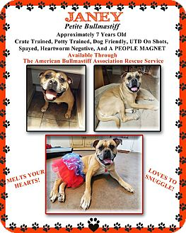 Bullmastiff Dog for adoption in North Port, Florida - Janey