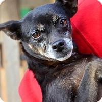 Adopt A Pet :: Cici - Midland, TX