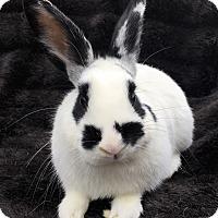 Adopt A Pet :: Rugby - Watauga, TX