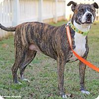 Adopt A Pet :: Ruby - Homewood, AL