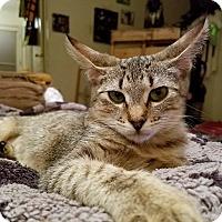 Adopt A Pet :: Holly - Hearne, TX