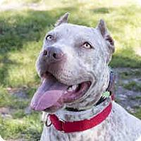 Adopt A Pet :: Myrna - Agoura, CA