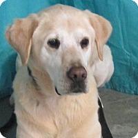 Adopt A Pet :: Maverick - LaGrange, KY