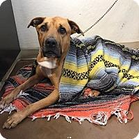 Adopt A Pet :: Milo - Chico, CA