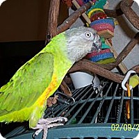 Adopt A Pet :: Brightsides - Lexington, GA