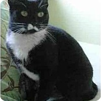 Adopt A Pet :: Sweetie - Portland, OR