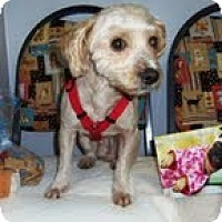 Adopt A Pet :: Murphy - Shawnee Mission, KS