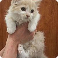 Adopt A Pet :: Leah - Reston, VA