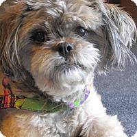 Adopt A Pet :: SHEENA-pending - Eden Prairie, MN