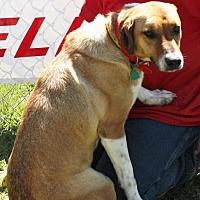 Adopt A Pet :: Peanut - Grayson, LA