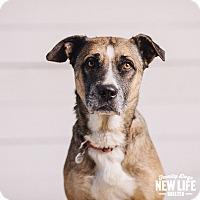 Adopt A Pet :: Val - Portland, OR