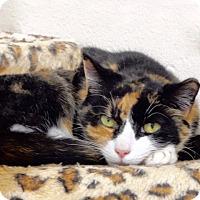 Adopt A Pet :: Calico - Long Beach, NY