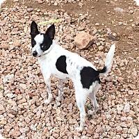 Adopt A Pet :: Turley - Phoenix, AZ