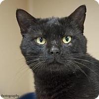 Adopt A Pet :: Remi  $20 - Lincolnton, NC