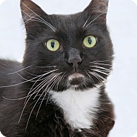 Adopt A Pet :: Bradford - Encinitas, CA
