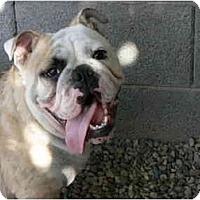 Adopt A Pet :: Sydney*adoption pending* - Gilbert, AZ