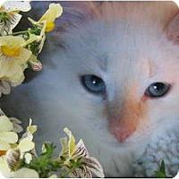 Adopt A Pet :: The Baby - Brea, CA