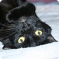 Adopt A Pet :: Zephyr - Santa Rosa, CA