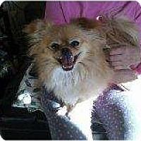 Adopt A Pet :: Sammy - Alliance, NE