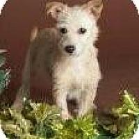 Adopt A Pet :: Quinn - Phoenix, AZ