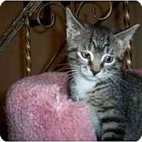 Adopt A Pet :: Little Joe - Secaucus, NJ