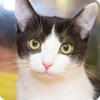Adopt A Pet :: Maya - Irvine, CA