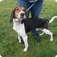 Adopt A Pet :: Celtus - Woodstock, ON