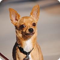 Adopt A Pet :: Stevie - Goodyear, AZ