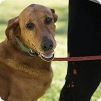 Adopt A Pet :: Ali - Daleville, AL