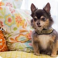 Adopt A Pet :: Declan - Mesa, AZ