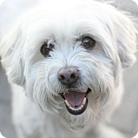 Adopt A Pet :: Peaches - Canoga Park, CA