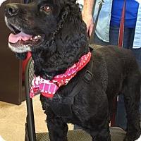 Adopt A Pet :: Moe-ADOPTED!! - Sacramento, CA