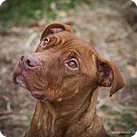 Adopt A Pet :: Emma - Lincolnton, NC