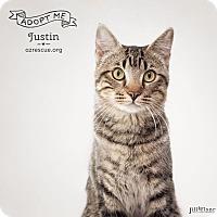 Adopt A Pet :: Justin - Phoenix, AZ