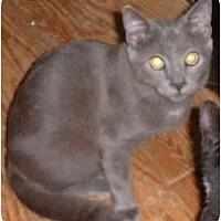 Adopt A Pet :: Pawlie - Stuarts Draft, VA