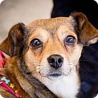 Adopt A Pet :: Lily - Saskatoon, SK