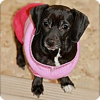 Adopt A Pet :: Harper Valley - Hastings, NY