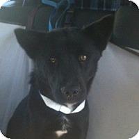 Adopt A Pet :: Rosemary - Justin, TX