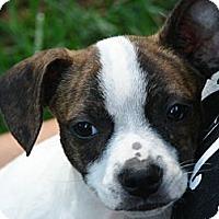 Adopt A Pet :: Radar - Afton, TN
