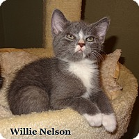 Adopt A Pet :: Willie Nelson - Bentonville, AR