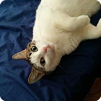 Adopt A Pet :: Gretchen - Chicago, IL