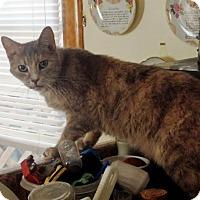 Adopt A Pet :: Possum - Nolensville, TN