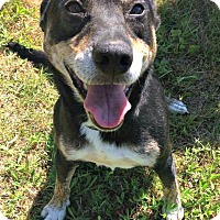 Adopt A Pet :: Riley - Jefferson, NC