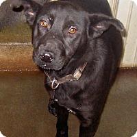 Shepherd (Unknown Type) Mix Dog for adoption in Tahlequah, Oklahoma - Viva